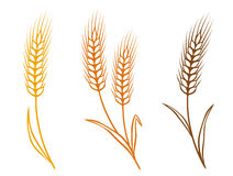 Colorful wheat Royalty Free Stock Photos