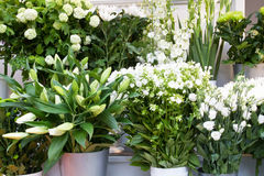Colorful white flowers in a flower shop Stock Photos