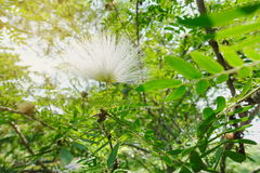 Colorful  white line brush flower flowers wayside between sidewa Royalty Free Stock Images