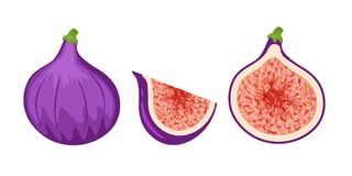 Colorful whole, slice and half figs . Vector illustration isolat. Ed on white background Stock Photos