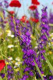 Colorful wild flowers Stock Image
