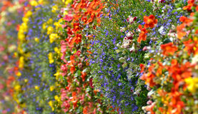 Colorful wild flowers decoration Stock Photos