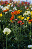 Colorful Wild Flowers. Wild flowers in several color Royalty Free Stock Photography