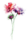 Colorful wild flowers Stock Photo