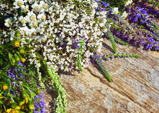 Colorful wild flowers Royalty Free Stock Photo