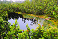 Colorful Wilderness from the summer Mountains Sumava Stock Image
