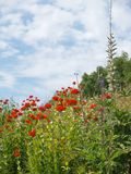 Colorful wildflowers royalty free stock photography