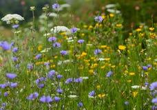 Colorful wildflowers Stock Photos