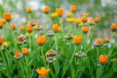 Colorful wildflowers Royalty Free Stock Photos