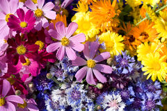 Colorful wildflowers. Yellow, blue, violet and purple spring wildflowers composition Royalty Free Stock Photos