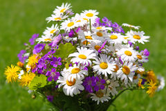Colorful wildflowers bouquet . Royalty Free Stock Photography