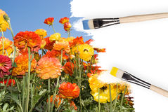 Colorful wildflowers painted Stock Photo