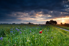 Colorful wildflowers at sunrise Royalty Free Stock Photography