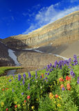 Colorful wildflowers in the Wasatch Mountains. Royalty Free Stock Photo