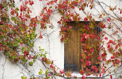 Colorful closed window royalty free stock photos