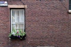 Windows of Boston. A colorful window on Boston Royalty Free Stock Photos