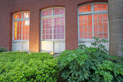 Colorful windows with green leaf Stock Photos