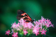 Colorful wings royalty free stock photo