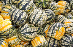Colorful winter or acorn squash on display royalty free stock photo