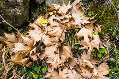 Colorful Winter Leaves Royalty Free Stock Photo