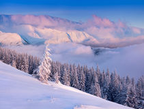 Colorful winter morning in the Carpathian mountains. Royalty Free Stock Photography