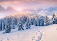Colorful winter morning in foggy mountains Stock Photos