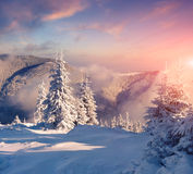 Colorful winter morning in foggy mountains Royalty Free Stock Photos