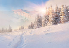 Colorful winter morning in mountains Royalty Free Stock Image