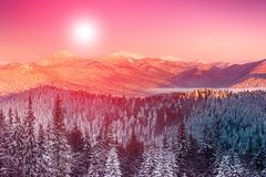Colorful winter morning in the mountains. Fantastic evening glowing by sunlight. Stock Photos