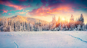 Colorful winter panorama in the Carpathian mountains. Royalty Free Stock Photo