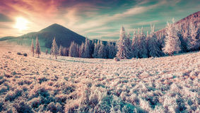 Colorful winter panorama in the misty mountains Royalty Free Stock Photography