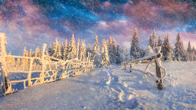 Colorful winter scene during heavy snowfall in the mountain fore Royalty Free Stock Photography