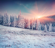 Colorful winter scene in the snowy mountains. Stock Images