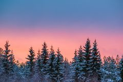Colorful winter sky and trees Stock Images