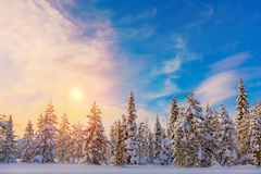 Colorful  Winter Sundown - northern nature - snowy forest landsc Royalty Free Stock Images