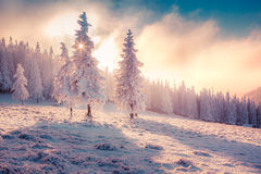 Colorful winter sunrise in the Carpathian mountain forest. Stock Photo