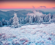 Colorful winter sunrise in the Carpathian mountains Stock Images