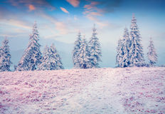 Colorful winter sunrise in the Carpathian mountains Royalty Free Stock Photo