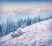 Colorful winter sunrise in the Carpathian mountains. Royalty Free Stock Image