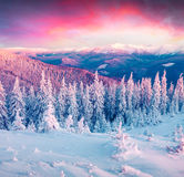 Colorful winter sunrise in the Carpathian mountains. Stock Photography