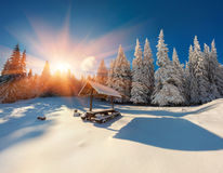Colorful winter sunrise in the forest. Splendid Christmas scene in the mountains. Artistic style post processed photo Stock Photos