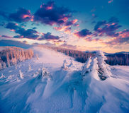 Colorful Winter Sunrise In The Carpathian Mountains. Royalty Free Stock Images