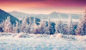 Colorful winter sunrise in the misty mountans. Stock Photos