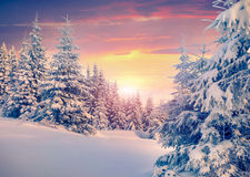 Colorful winter sunrise in mountain forest. Royalty Free Stock Photography