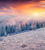 Colorful winter sunrise in  mountain forest Stock Photography