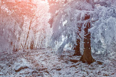 Colorful winter sunrise in mountain forest. Stock Photography