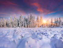 Colorful winter sunrise in mountain forest. Stock Photos
