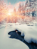 Colorful winter sunrise in the mountain forest with dark water r Royalty Free Stock Photo