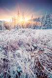Colorful winter sunrise in the mountain forest. Royalty Free Stock Photography