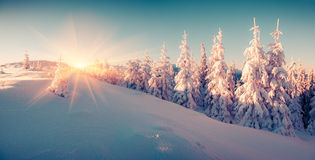 Colorful winter sunrise in the mountain forest. Instagram toning Stock Images